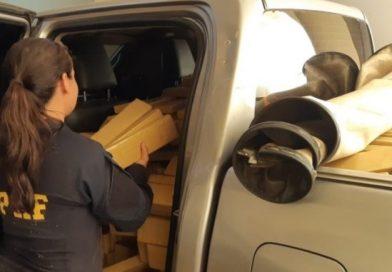 PRF em Terenos apreende 1,5 T de maconha e recupera veículo roubado no RJ