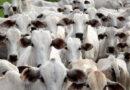Com Precoce MS, produtor rural melhora nutrição animal e valoriza produção