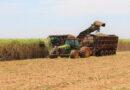 Com mercado aquecido, Mato Grosso do Sul aumentou em cinco vezes a exportação de açúcar