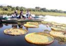 ObservaturMS realiza pesquisa com setor turístico estadual sobre impactos da pandemia