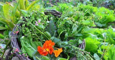 Agricultura urbana incentiva cultivo de plantas alimentícias não convencionais