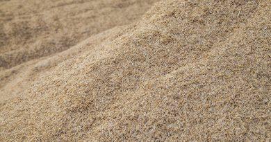 Confirmada negociação de 50 mil ton de arroz com casca para o exterior