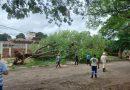 Dourados – Força tarefa da Prefeitura retira 50 árvores caídas